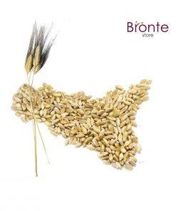 grano-antico-margherito-bronte-store